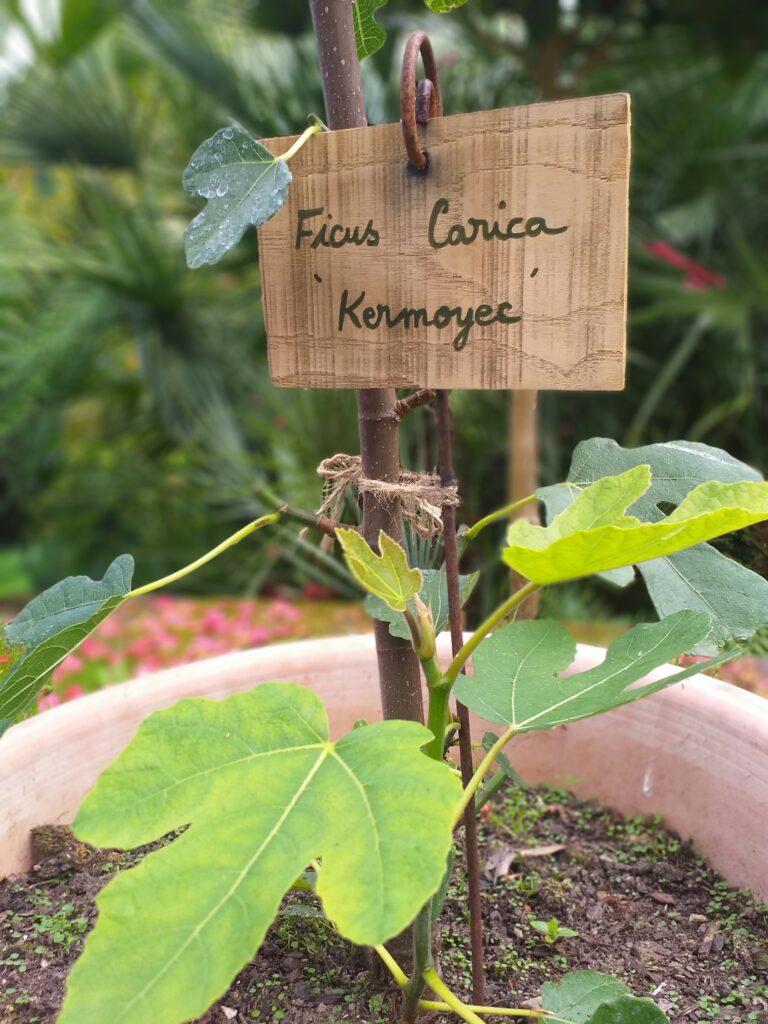 Les etiquettes rectangulaires en bois pour jardins  Un jardin en pente douce
