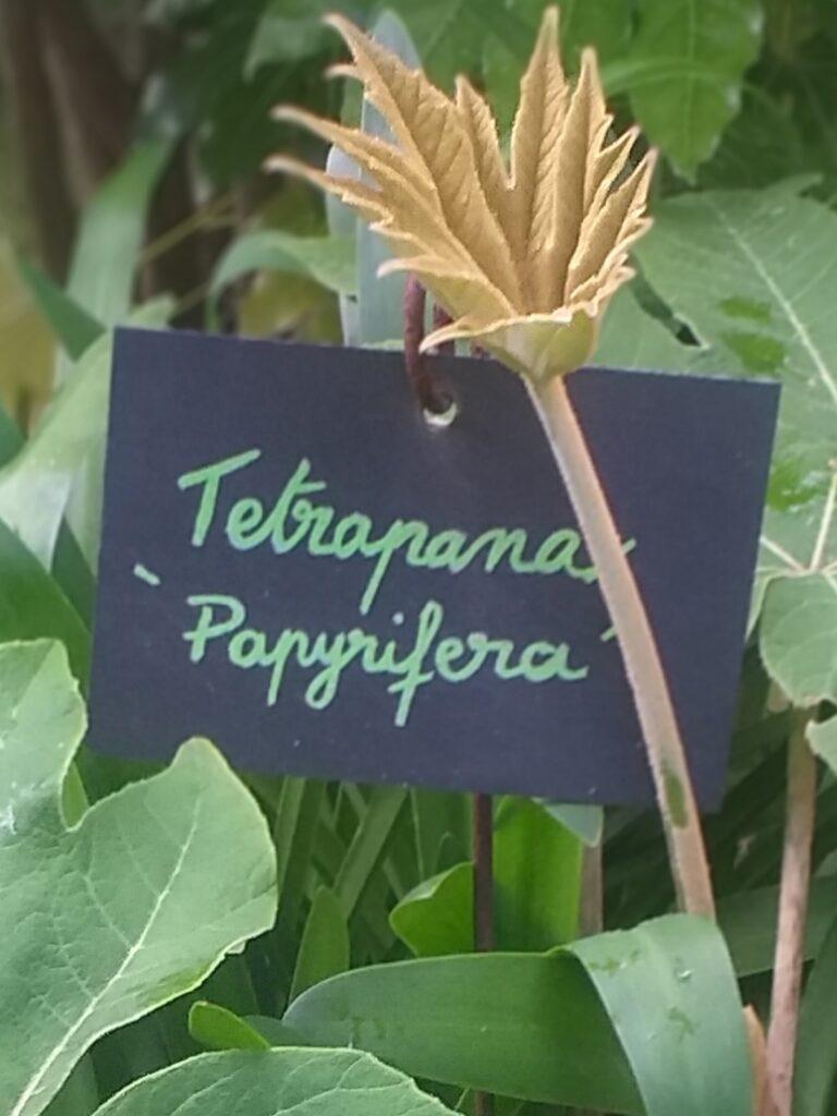 Les etiquettes rectangulaires ardoise pour jardinsUn jardin en pente douce