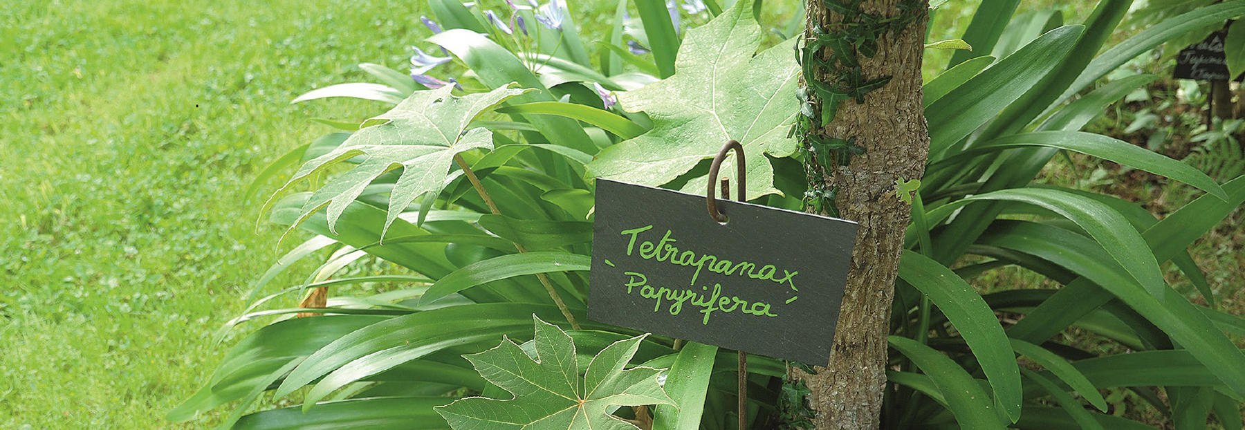 la signalétique des végétaux Un jardin en pente douce