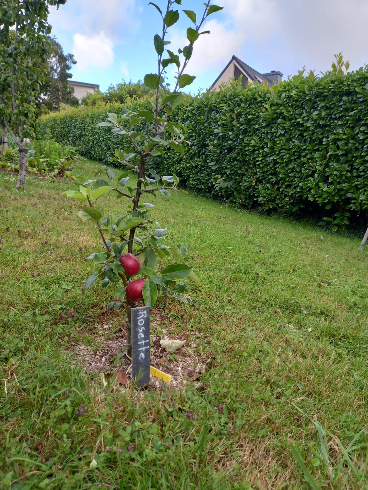 Témoignage de Maurice, amateur de jardin